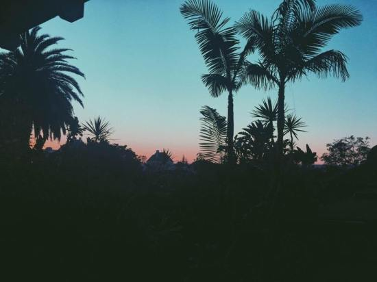 skyline-los-angeles-palm-trees-sunset